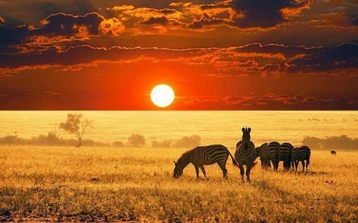 Z bre savane fond afrique fen tre sur le quotidien - Felin de la savane ...