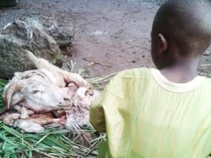 L'enfant et le mouton de Tabaski. (Crédit Photo : Solo Niaré)